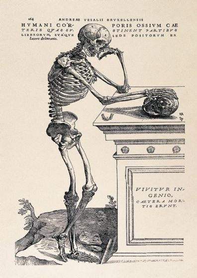 "Vesalius, Andreas: Human Anatomy Print ""Skeleton Contemplating a Skull"" (1543). Fine Art Print/Poster. Sizes: A4/A3/A2/A1 (0033)"